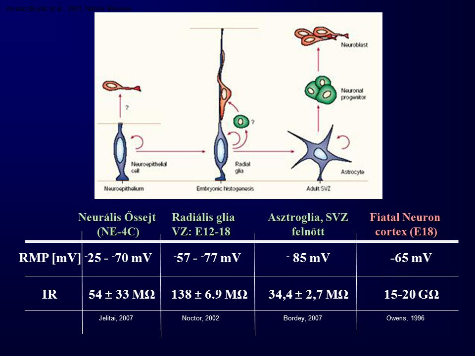RMP [mV] IR -57 - -77 mV 138 ± 6.9 MΩ 54 ± 33 MΩ 15-20 GΩ -65 mV
